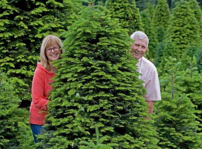 How To Take Care Of A Real Christmas Tree.Caring For Your Tree The Tree Wisemans